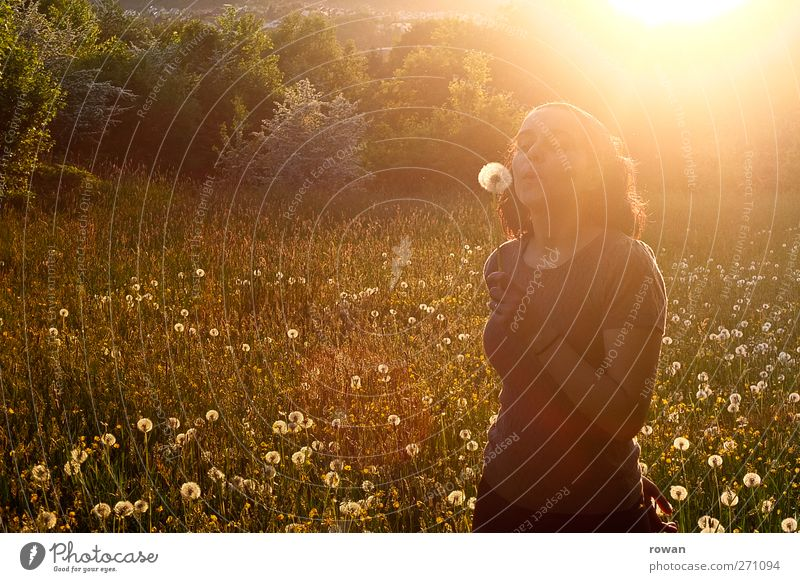 dandelion Human being Feminine Young woman Youth (Young adults) 1 Landscape Sun Sunrise Sunset Sunlight Spring Summer Beautiful weather Grass Meadow Happy