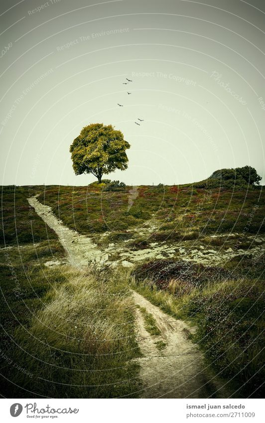 path track and tree in the meadow Tree Green Forest Mountain Nature Landscape Exterior shot Vacation & Travel Places Destination Autumn fall background