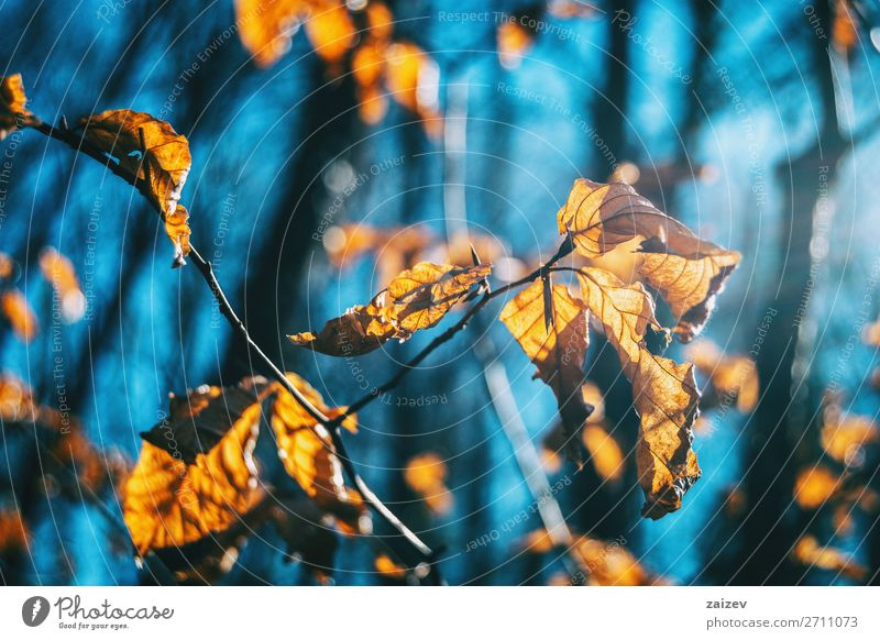 Close-up of some autumn leaves on a branch Nature Plant Beautiful Leaf Life Autumn Natural Sadness Death Growth Hope Seasons Beauty Photography Wallpaper