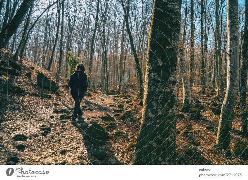 A girl walking through a forest of bare trees Relaxation Meditation Vacation & Travel Tourism Adventure Hiking Human being Woman Adults Nature Landscape Autumn