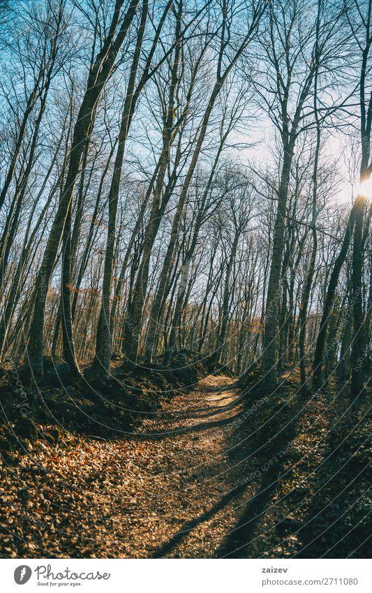 A path in an autumnal forest Adventure Sun Hiking Nature Landscape Autumn Tree Leaf Forest Lanes & trails Serene way walkthrough Corridor Footpath pathway