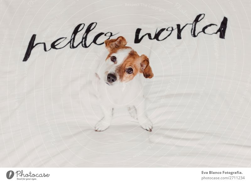 cute small dog lying white sheet with hello world message Elegant Joy Face Relaxation House (Residential Structure) Office Animal Earth Accessory Pet Dog Love