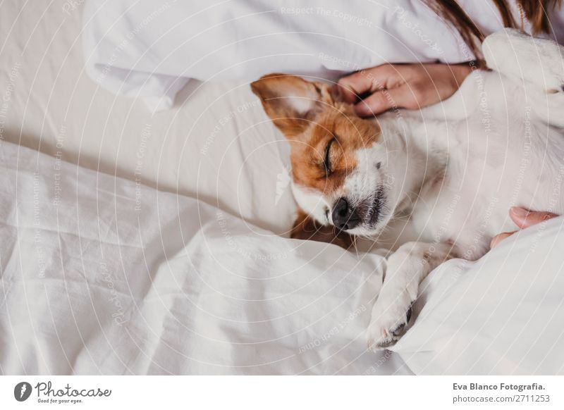 cute small dog lying on bed with her human. Woman Human being Dog White House (Residential Structure) Relaxation Animal Joy Face Adults Love Funny Small Office