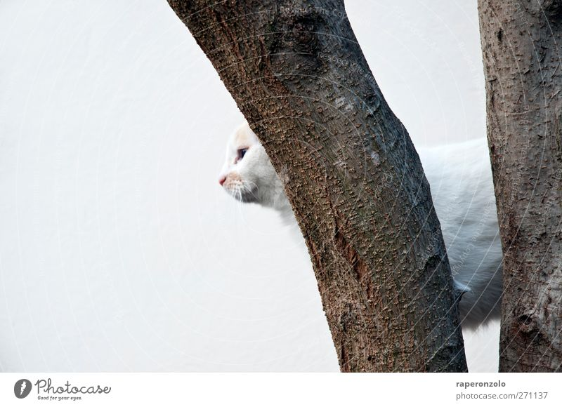 Beware of the cat Tree Animal Pet Cat 1 Hunting White Cool (slang) Watchfulness Loneliness Concentrate Tree bark Climbing Backwards Background picture