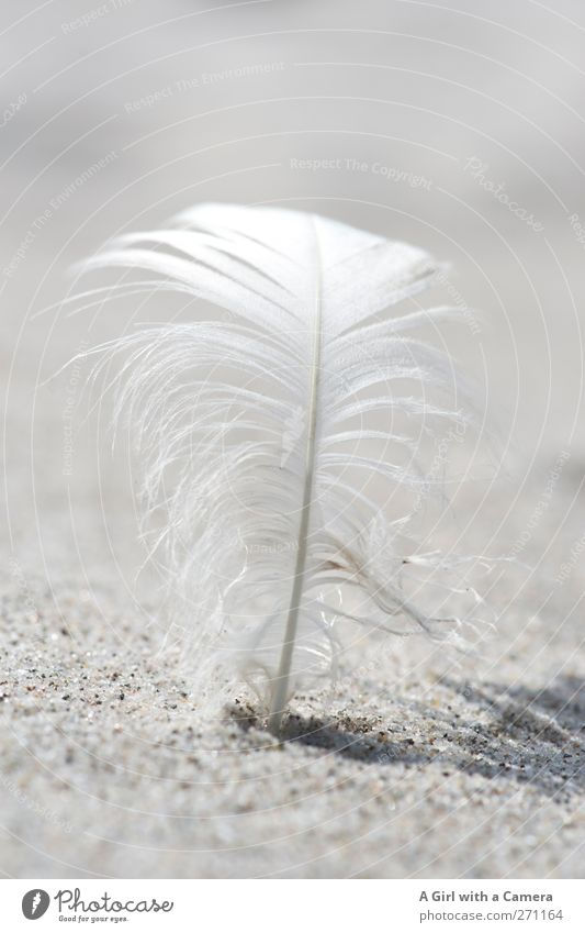 Nature White Beautiful Sun Beach Environment Sand Bright Stand Feather Beautiful weather Clean Near Firm Curved Fix