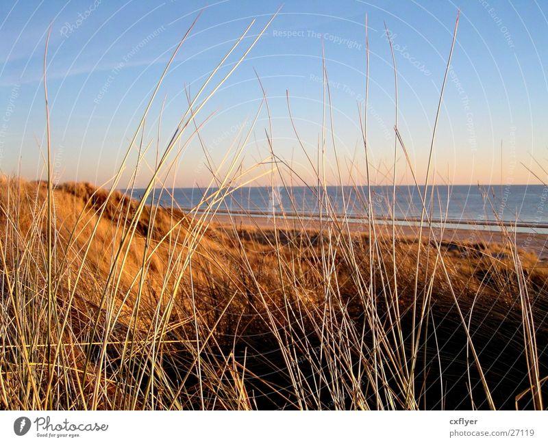 dune grass Ocean Grass Beach dune Sand Water