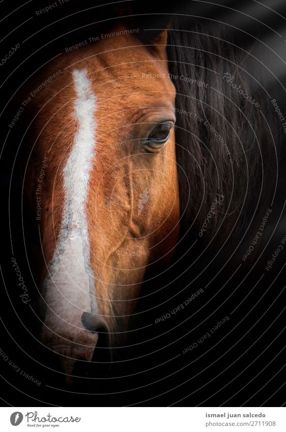 elegant brown horse portrait in the nature Horse Brown Portrait photograph Animal Wild head eyes ears hair Nature Cute Beauty Photography Elegant wild life