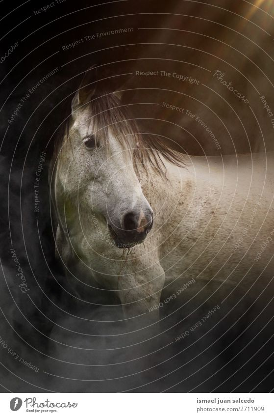 beautiful white horse portrait in the nature Horse White Portrait photograph Animal Wild head eyes ears hair Nature Cute Beauty Photography Elegant wild life