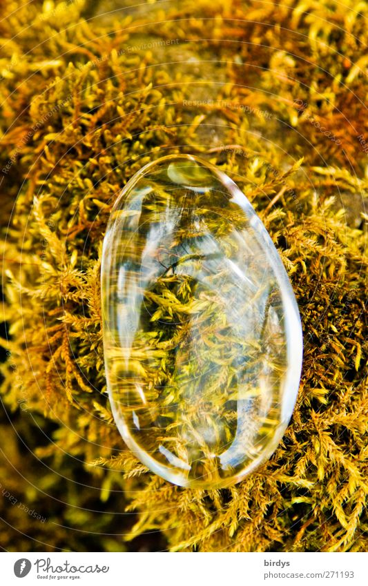 Crystal clear Moss Magnifying glass Glass Glittering Clean Yellow Transparent Glass bead Esotericism Noble Colour photo Exterior shot Copy Space top Day