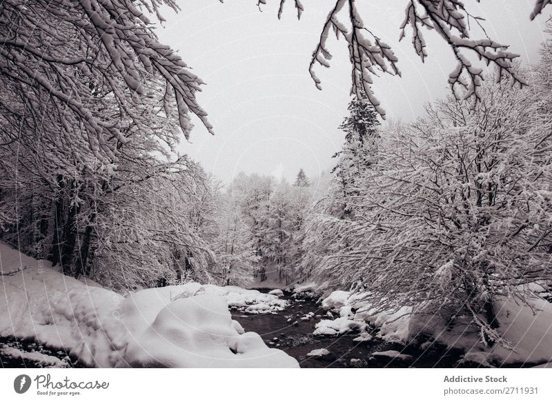 Fir forest covered with snow Forest Winter Nature Snow White Mountain Hill Cold