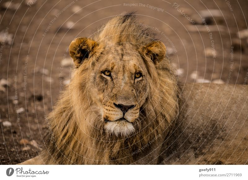 Attentive!!! Vacation & Travel Tourism Trip Adventure Far-off places Freedom Sightseeing Safari Expedition Warmth Drought Animal Wild animal Animal face Pelt