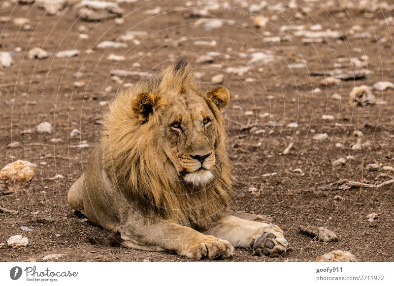 Just relax Vacation & Travel Tourism Trip Adventure Far-off places Freedom Safari Expedition Environment Nature Earth Sand Warmth Drought Animal Wild animal