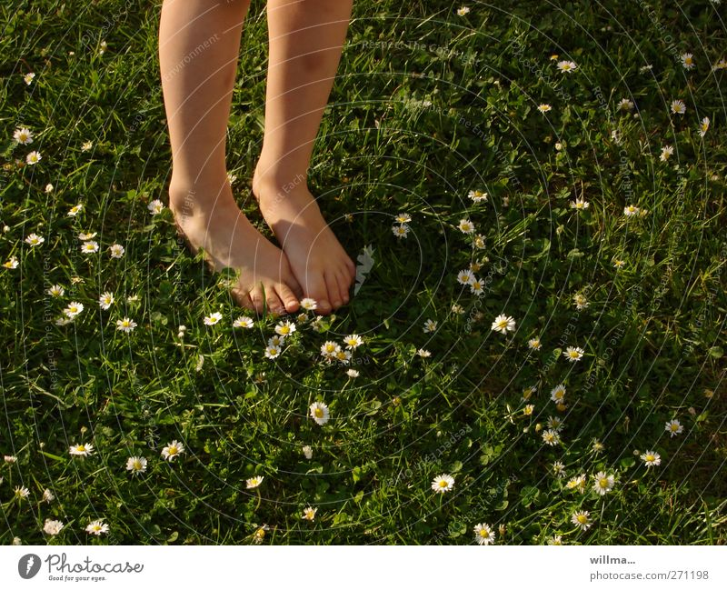 feel cool damp grass Infancy Youth (Young adults) Toes Legs Feet Nature Summer Beautiful weather Daisy Meadow Stand Naked Natural Green Vacation & Travel