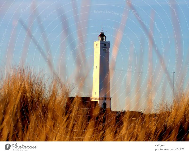 Lighthouse in the dunes Beach Grass Architecture Beach dune Sun