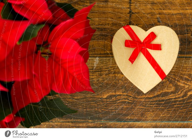 Present with heart shape and seasonal plant with red leaves Christmas & Advent Plant White Red Flower Leaf Wood Love Emotions Happy Feasts & Celebrations Design