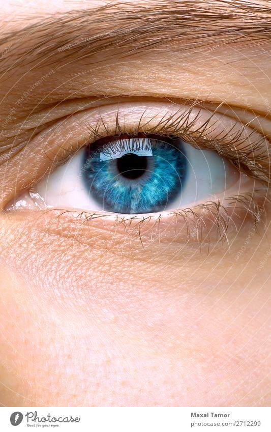 Macro of a woman's blue eye Skin Woman Adults Eyes Blue Eyebrow Eyelash Vision girl iridescence iridescent ophthalmology optic Refraction Appearance young