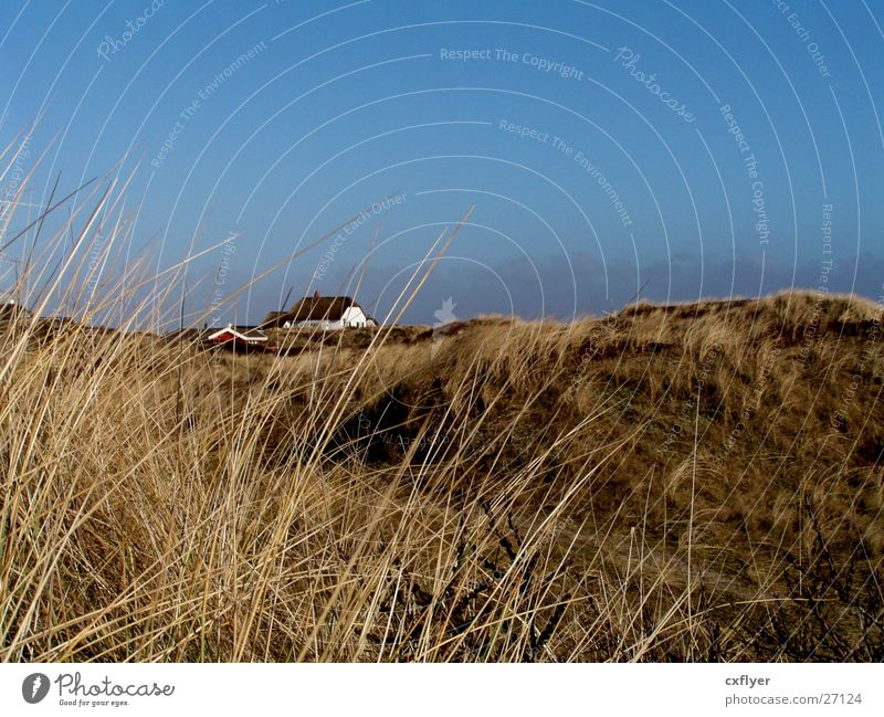 House (Residential Structure) Loneliness Grass Sand Hill Beach dune