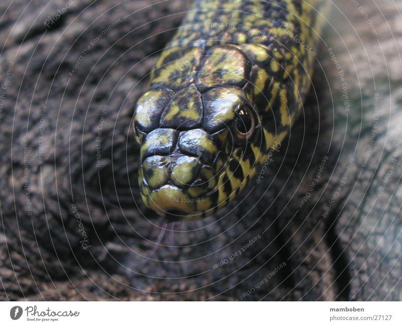 Nature Animal Wild animal Snake Viper