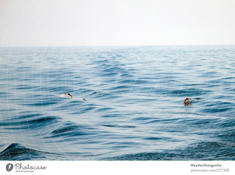 Sky Nature Water Ocean Animal Spring Swimming & Bathing Together Elegant Waves Wild animal Wind Energy Speed Group of animals Cute