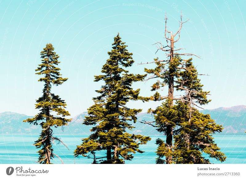 Trees in front of Emerald Bay and Lake Tahoe Vacation & Travel Tourism Summer Mountain Garden Environment Nature Sky Grass Leaf Park Forest Hill Rock River