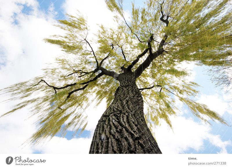 The High Priestess Plant Sky Clouds Spring Beautiful weather Tree Tree trunk Leaf Treetop Tree bark Park Adventure Movement Bizarre Emotions Mysterious Nature