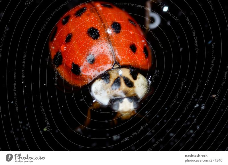 Ladybird Freischwimmer Animal Beetle 1 Watering can Drop Swimming & Bathing Dark Fluid Red Black Love of animals Help Exhaustion Joie de vivre (Vitality)