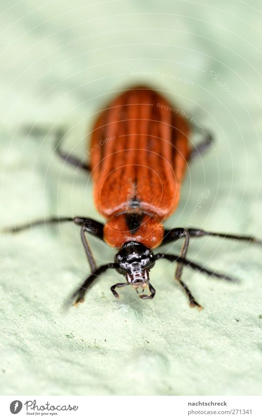 A little beetle sits on the wall, on the lookout Beetle Natural Red Black Cool (slang) Comfortable Beautiful Colour photo Multicoloured Exterior shot Close-up