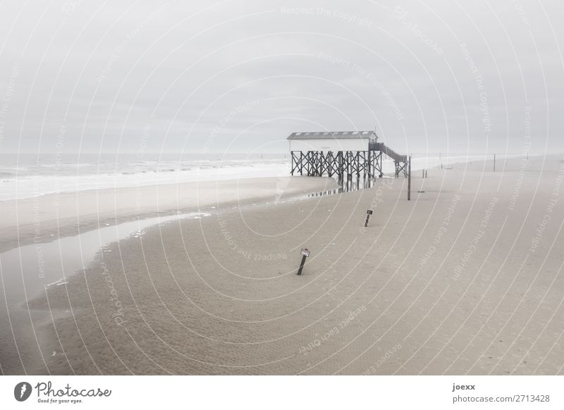 Happiness in the distance Weather Bad weather Wind Fog Coast Beach North Sea House (Residential Structure) Pile-dwelling Far-off places Tall Maritime Retro Wild