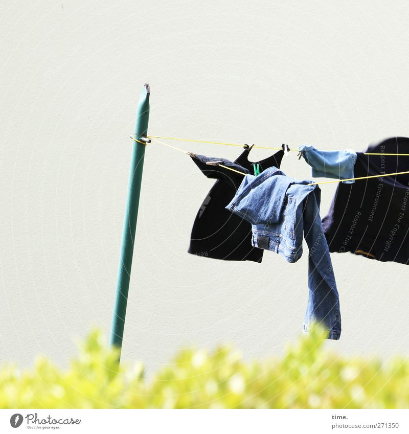 Hiddensee | air conditioned Spring Beautiful weather Hedge Garden T-shirt Jeans Laundry Clothesline Metal Flying Hang Fresh Wild Communicate Attachment Textiles