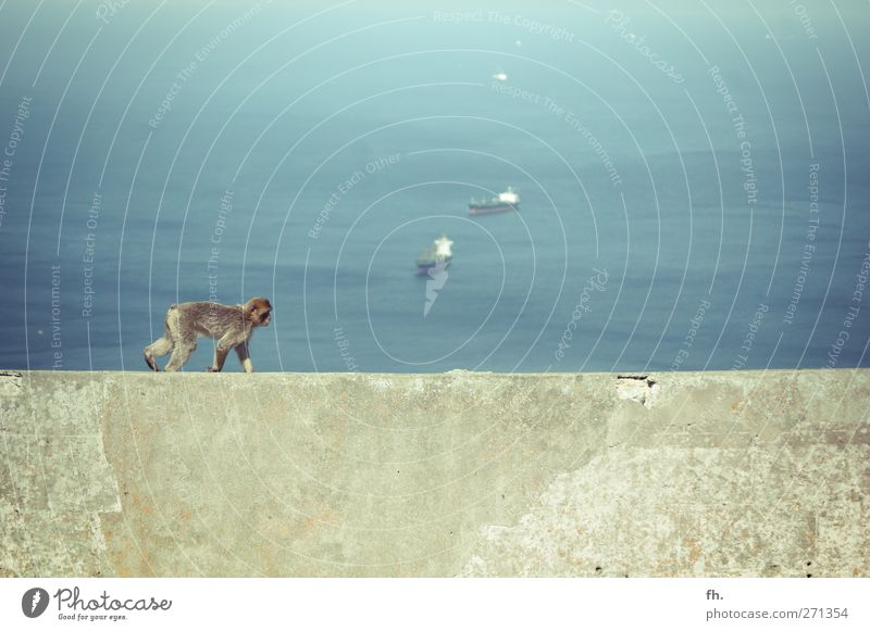 Apey Road Water Beautiful weather Ocean Mediterranean sea Gibraltar Watercraft Animal Pelt Monkeys monkey 1 Concrete Discover Relaxation Going To enjoy Athletic