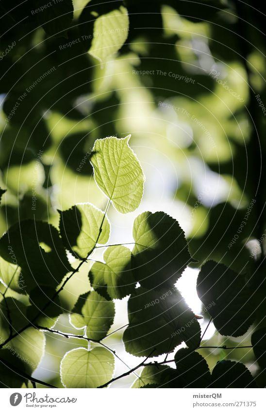 Green Valldemossa. Art Esthetic Contentment Nature Natural Leaf Leaf canopy Heaven Green undertone Ecological Healthy Exterior shot Light (Natural Phenomenon)