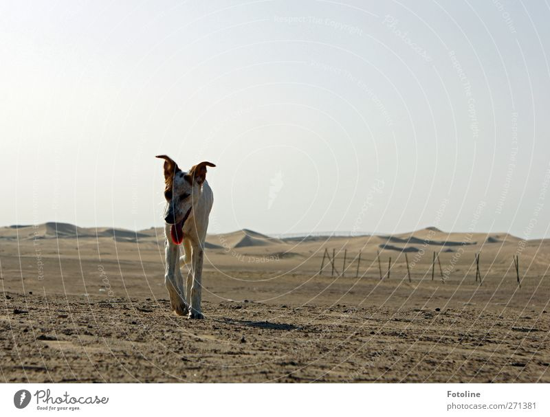 Dog Nature Animal Loneliness Environment Landscape Warmth Sand Bright Brown Earth Natural Elements Individual Desert Hot