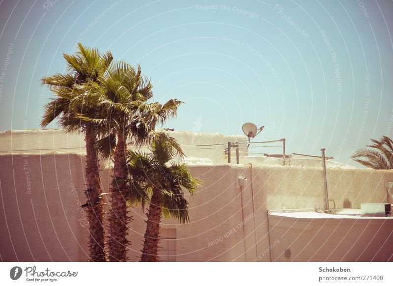 palm tree.01 Vacation & Travel Summer House (Residential Structure) Cable Satellite dish Earth Cloudless sky Warmth Plant Palm tree Small Town Wall (barrier)