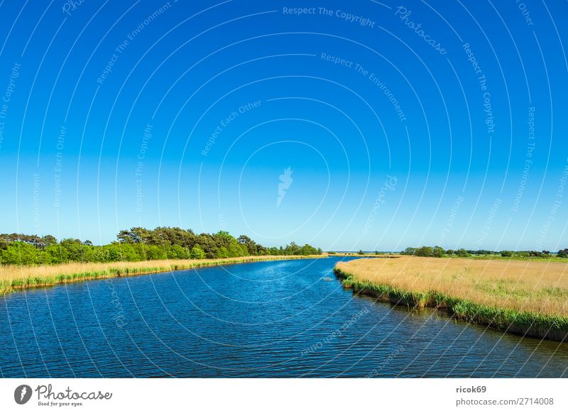 View of the Prerow stream in Prerow Relaxation Vacation & Travel Tourism Nature Landscape Water Cloudless sky Weather Tree Leaf Forest Blue Yellow Green Idyll