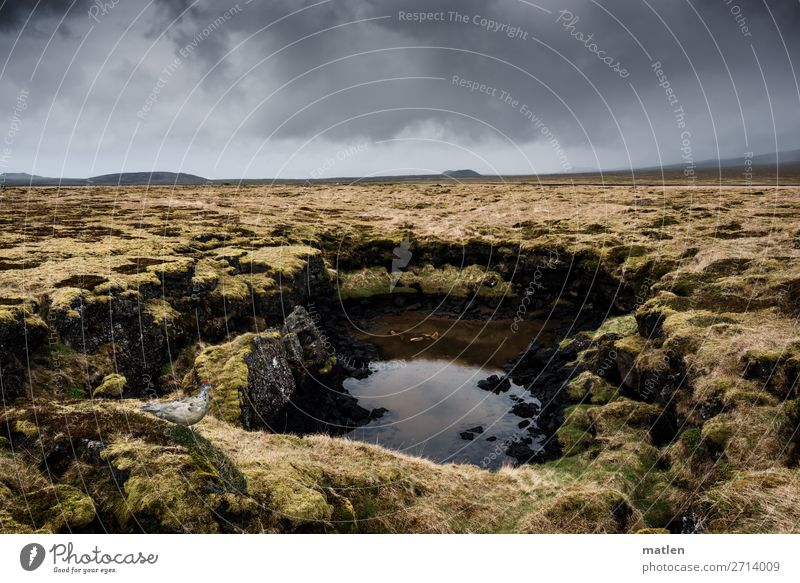 water hole Nature Landscape Plant Sky Clouds Horizon Spring Bad weather Moss Rock Bog Marsh Pond Deserted Dark Brown Yellow Gray Green Iceland Snæfellsnes