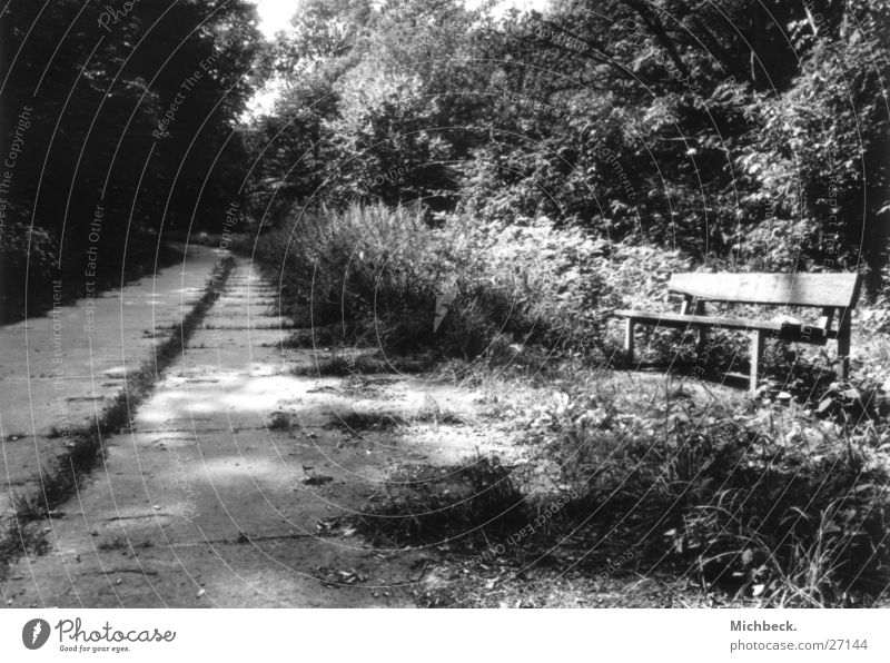 Time times way Light Park Black White Forest Lanes & trails Bench paved path