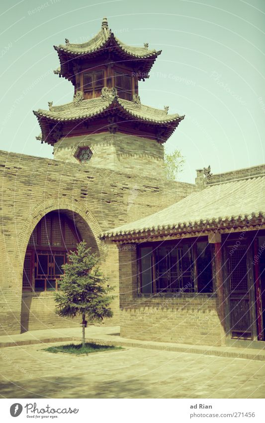 lonely tree Spring Plant Tree Foliage plant Park Xian China Small Town Old town Deserted House (Residential Structure) Church Palace Castle Manmade structures