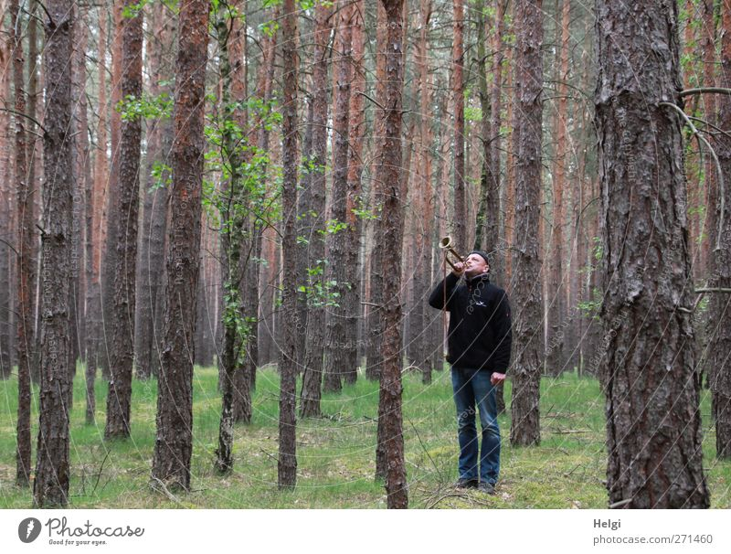 Man in jeans and dark jacket is standing in a spruce forest blowing a trumpet Human being Masculine Adults 1 45 - 60 years Environment Nature Plant Spring Tree