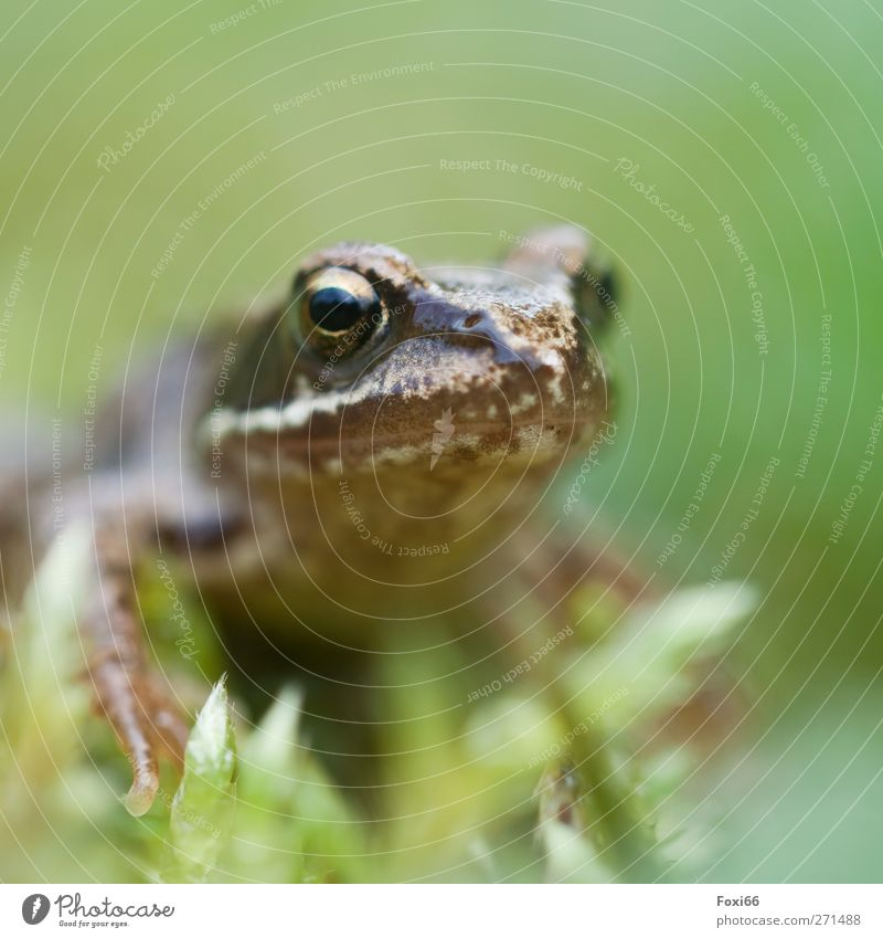 spring quak Air Water Spring Grass Bushes Garden Meadow Animal Wild animal Frog 1 Cold Natural Curiosity Brown Green Love of animals Attentive Calm Movement