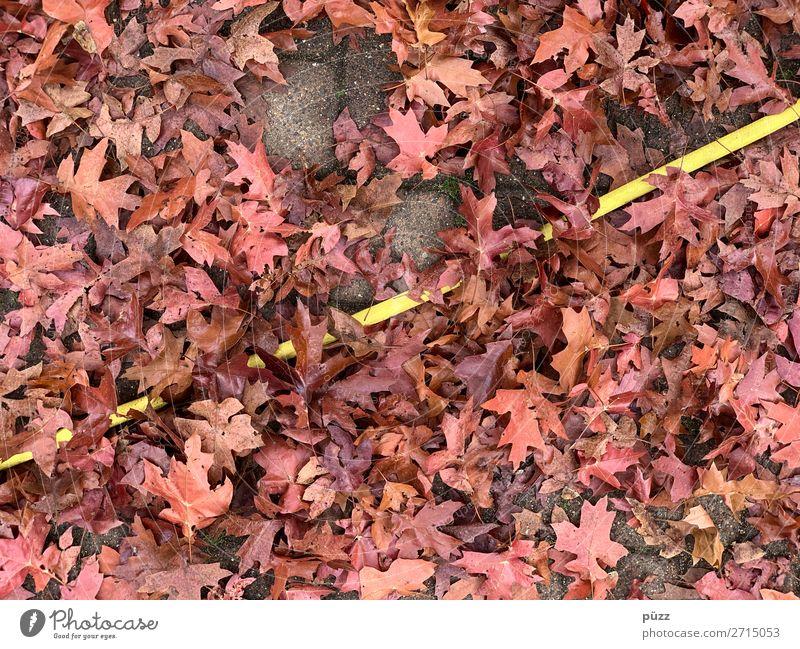line Environment Nature Landscape Plant Earth Water Tree Leaf Garden Park Line Brown Yellow Red Direct Hose Gardening Gardener Garden hose Diagonal Tilt