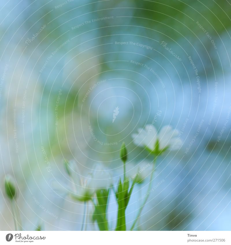 Blurred Vision Nature Plant Spring Beautiful weather Flower Blossom Wild plant Blue Green Pink White Blossoming Delicate Light green Small Watercolors