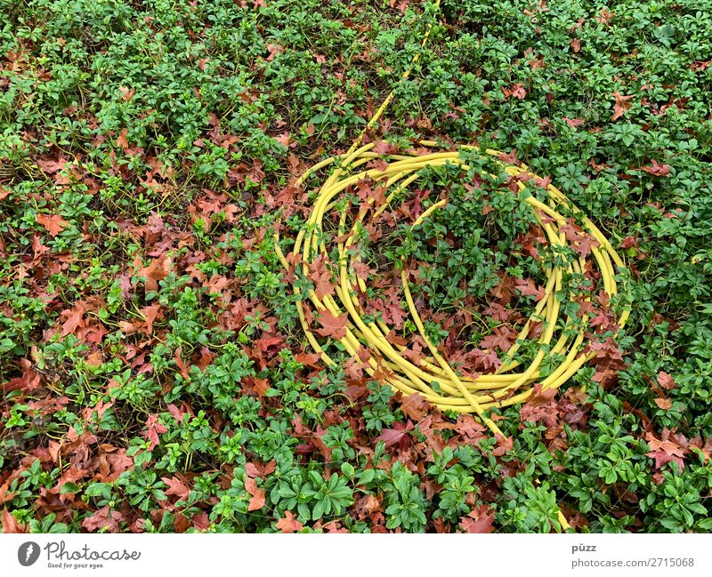 Long line Environment Nature Plant Earth Water Leaf Foliage plant Ground cover plant Garden Park Sign Line Knot Yellow Green Hose Gardener Market garden