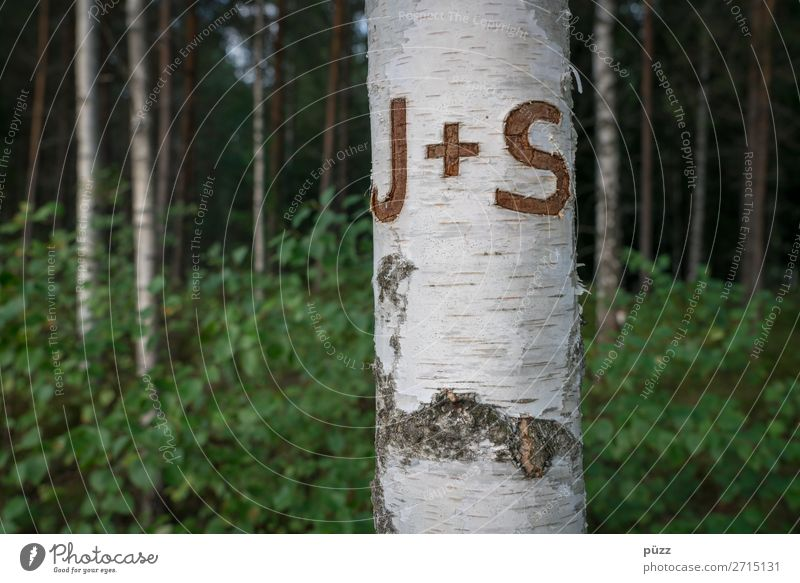 J + S Valentine's Day Environment Nature Landscape Plant Tree Birch tree Birch wood Birch bark Wood Sign Characters Plus Love Dream Brown Green White Emotions