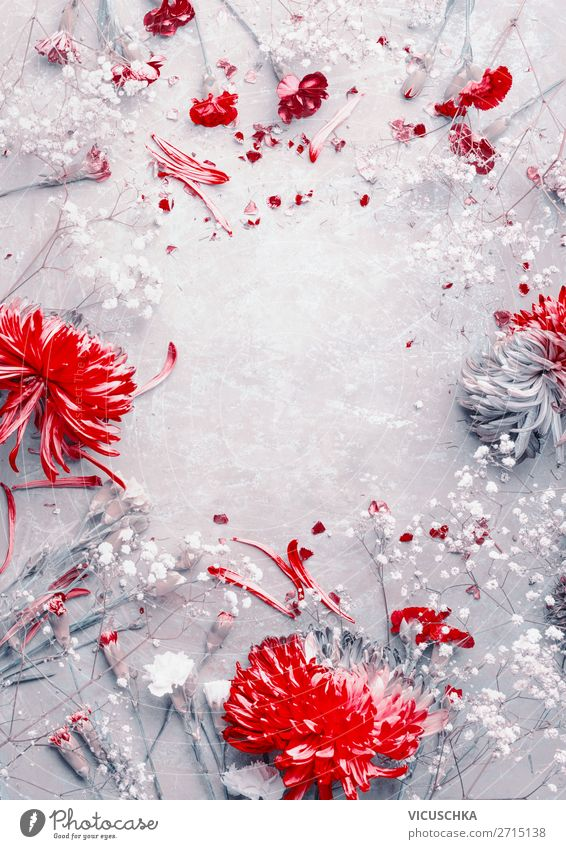 Red and white flower frames Style Design Feasts & Celebrations Nature Plant Flower Decoration Bouquet Gray White Background picture pattern beauty creative