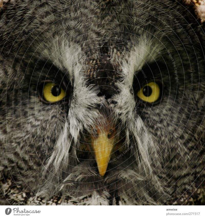 Animal Yellow Gray Bird Brown Gold Wild animal Feather Near Animal face Zoo Beak Owl birds Petting zoo Owl eyes