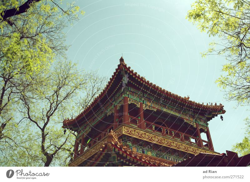 Lama Temple Spring Plant Tree Park Meadow Beijing China Deserted Palace Castle Pagoda Pagodal roof Temple tower Lama temple Old Authentic Religion and faith