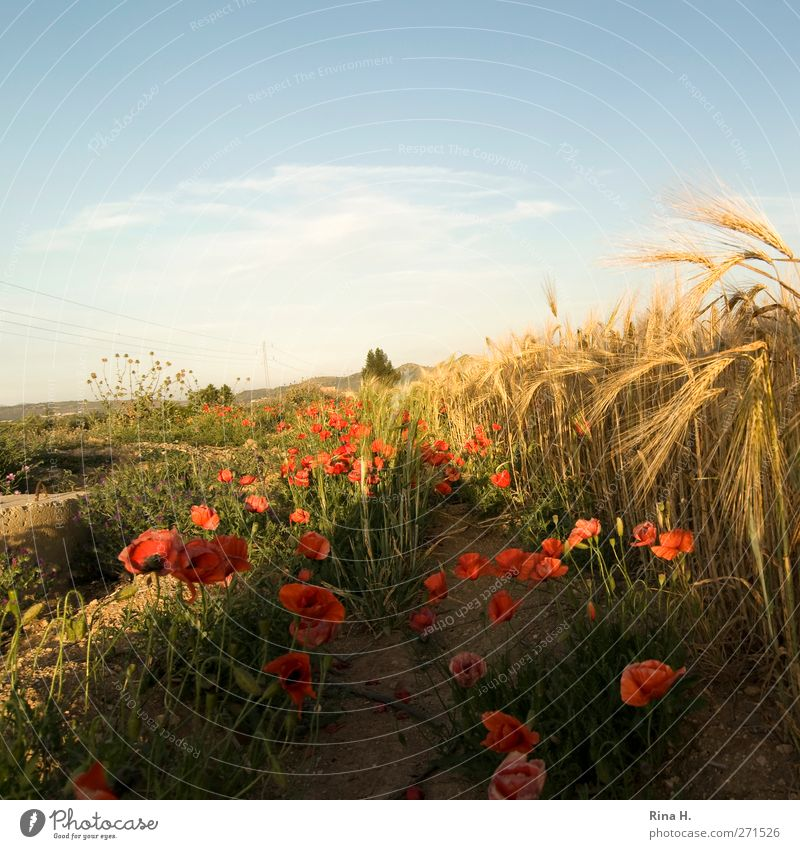 Sky Nature Blue Summer Flower Landscape Yellow Blossom Horizon Orange Field Growth Illuminate Beautiful weather Blossoming Agriculture
