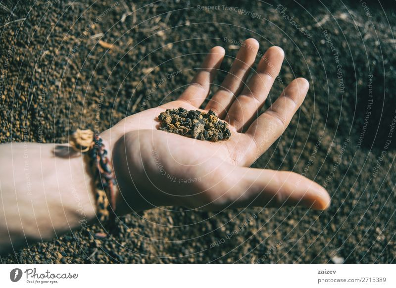 Close-up of some volcanic soil held by a human hand with a bracelet Vacation & Travel Adventure Hiking Human being Hand Fingers Nature Earth Stone Small Natural
