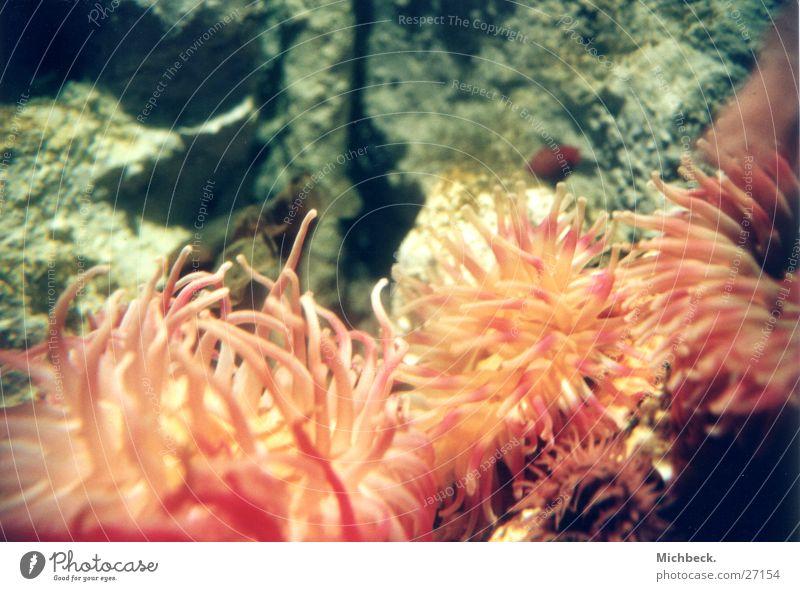 plant or animal Tentacle Plant Sealife sea dweller