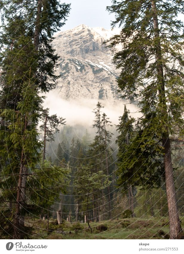 Nature Tree Calm Forest Mountain Alps Peak Climbing Moss Mountaineering